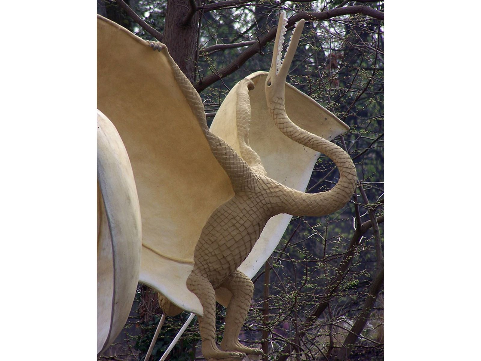 Pterosaur_Oolite_2